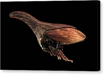 Treehopper Canvas Print by Us Geological Survey