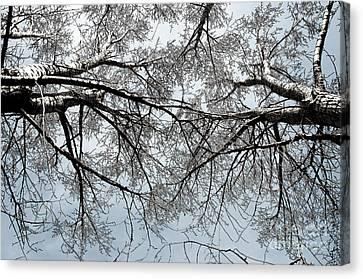 Trees  1 Canvas Print by Minnie Lippiatt