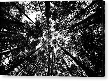 Canvas Print featuring the photograph Trees Above Me by Daniel Woodrum