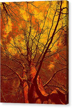 Trees Canvas Print by Allen Beilschmidt
