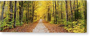 Trees Along A Pathway In Autumn Canvas Print by Panoramic Images