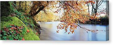 Trees Along A River, River Dart Canvas Print by Panoramic Images