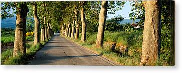 Trees Along A Road, Vaucluse, Provence Canvas Print by Panoramic Images