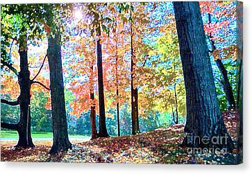 Trees Along The Lyman Estate Canvas Print