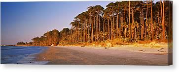 Trees Along The Shoreline, Hunting Canvas Print