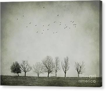 White Birds Canvas Print - Trees And Birds by Diana Kraleva
