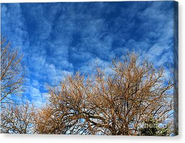 Trees And Clouds Canvas Print by Jay Nodianos