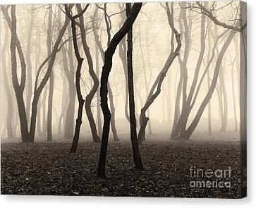 Trees And Fog No. 1 Canvas Print