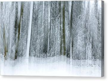 Trees And Snow Abstract Canvas Print by David Birchall