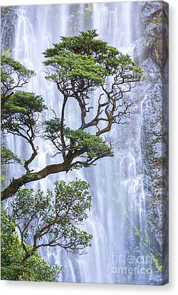 Trees And Waterfall Canvas Print