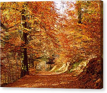 Trees At Huelgoat Forest In Autumn Canvas Print by Panoramic Images