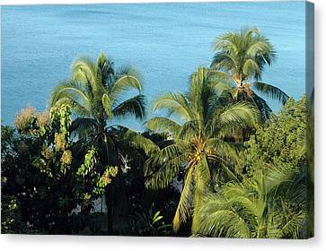 Trees At The Beach Canvas Print