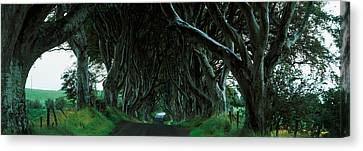 Trees At The Dark Hedges, Armoy, County Canvas Print by Panoramic Images