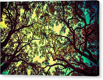 Trees Closing In Canvas Print by J Riley Johnson