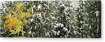Trees Covered With Snow, Grand Teton Canvas Print by Panoramic Images