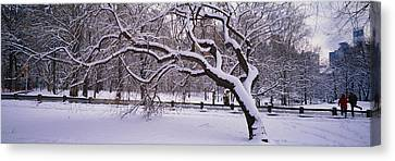 Trees Covered With Snow In A Park Canvas Print by Panoramic Images