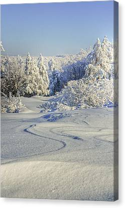 Trees Covered With Snow In A Sunny Winter Day Canvas Print