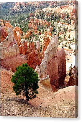 Canvas Print featuring the photograph Tree's Eye View by Meghan at FireBonnet Art