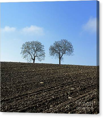 Trees In A Agricultural Landscape. Canvas Print by Bernard Jaubert