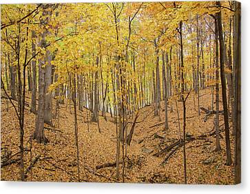 Trees In A Forest During Autumn Canvas Print by Panoramic Images