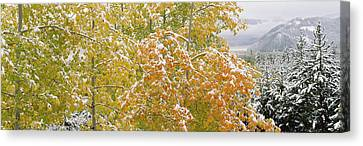 Trees In A Forest, Grand Teton National Canvas Print by Panoramic Images