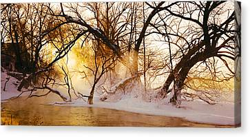 Trees In A Forest Canvas Print by Panoramic Images