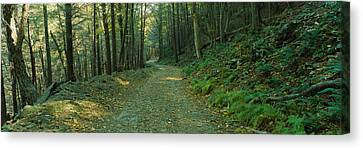 Lush Foliage Canvas Print - Trees In A National Park, Shenandoah by Panoramic Images