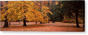 Trees In A Park, Chestnut Ridge County Canvas Print by Panoramic Images