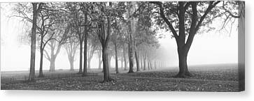 Trees In A Park During Fog, Wandsworth Canvas Print by Panoramic Images