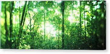 Trees In A Rainforest, Arenal Region Canvas Print by Panoramic Images