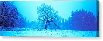 Trees In A Snow Covered Landscape Canvas Print by Panoramic Images