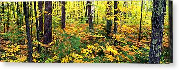 Trees In Autumn, Copper Falls State Canvas Print