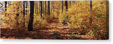 Trees In Autumn, Stowe, Lamoille Canvas Print by Panoramic Images