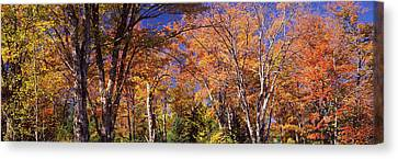 Trees In Autumn, Vermont, Usa Canvas Print by Panoramic Images