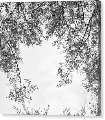 Trees In Black And White Canvas Print by Priska Wettstein