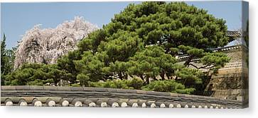 Trees In Bloom At Changdeokgung Palace Canvas Print by Panoramic Images
