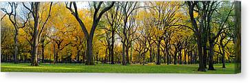 Canvas Print featuring the photograph Trees In Central Park by Yue Wang