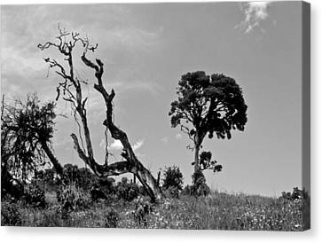 Canvas Print featuring the photograph Trees In Cloud Forest by Lana Enderle