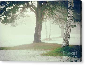 Canvas Print featuring the photograph Trees In Fog by Silvia Ganora