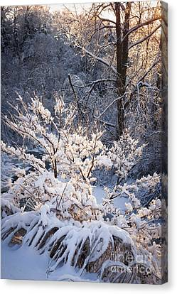 Sunflare Canvas Print - Trees In Forest After Winter Storm by Elena Elisseeva