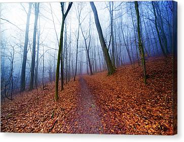 Trees In Forest In Autumn Canvas Print by Wladimir Bulgar