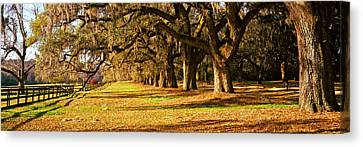 Trees In Garden, Boone Hall Plantation Canvas Print by Panoramic Images