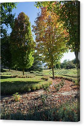 Trees In Lavender Field, Wanaka Canvas Print by Panoramic Images