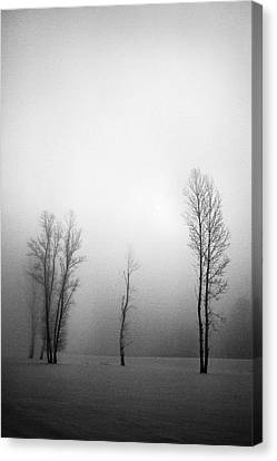 Trees In Mist Canvas Print by Davorin Mance