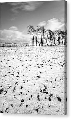Trees In Snow Scotland IIi Canvas Print by John Farnan