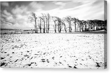 Trees In Snow Scotland Iv Canvas Print by John Farnan