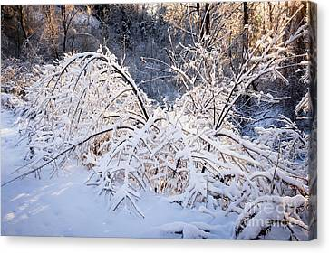 Sunflare Canvas Print - Trees In Snowy Forest After Winter Storm by Elena Elisseeva