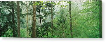 Trees In Spring Forest, Turkey Run Canvas Print