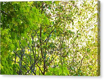 Trees In Summer Canvas Print