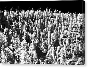 Trees In The Canyon Canvas Print by John Rizzuto